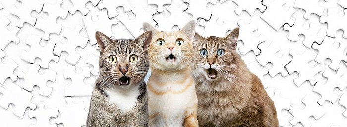 Surprised cats that broke and ruined a puzzle.